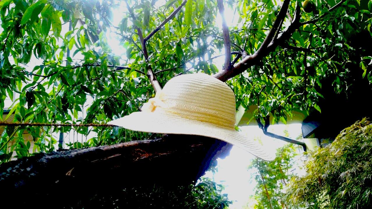 昆虫採集に明け暮れた夏休みを想起させる日除け帽  撮影 三和正明